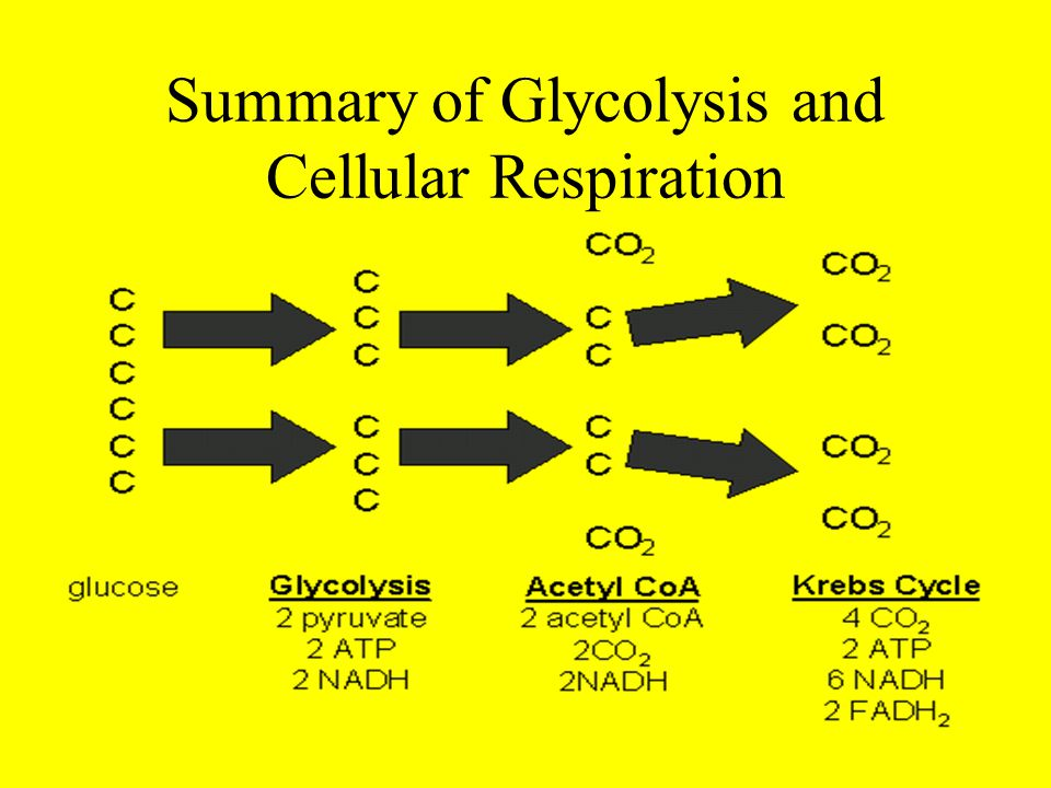 Summary of Glycolysis and Cellular Respiration