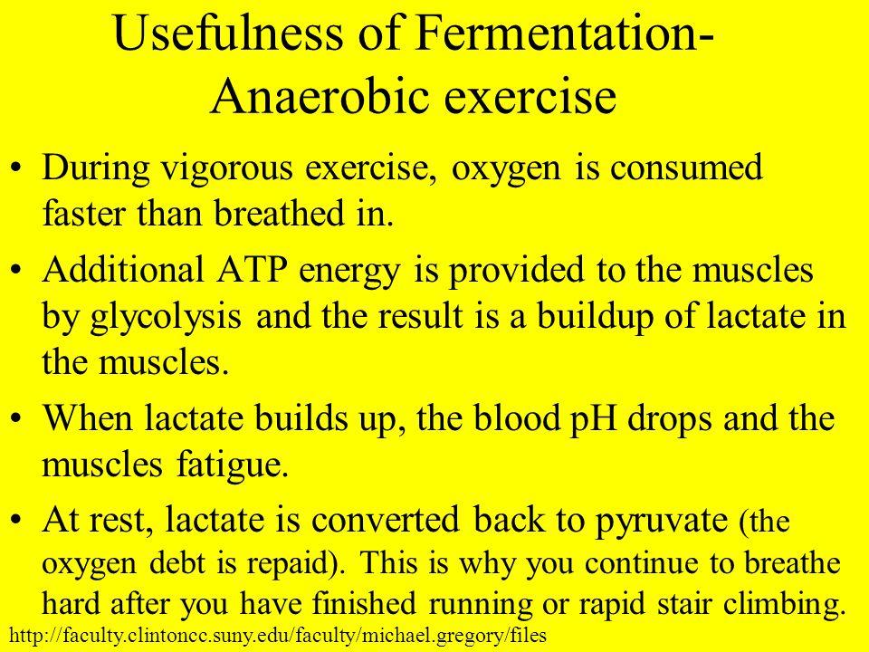 Usefulness of Fermentation- Anaerobic exercise