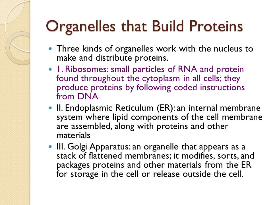 Organelles that Build Proteins