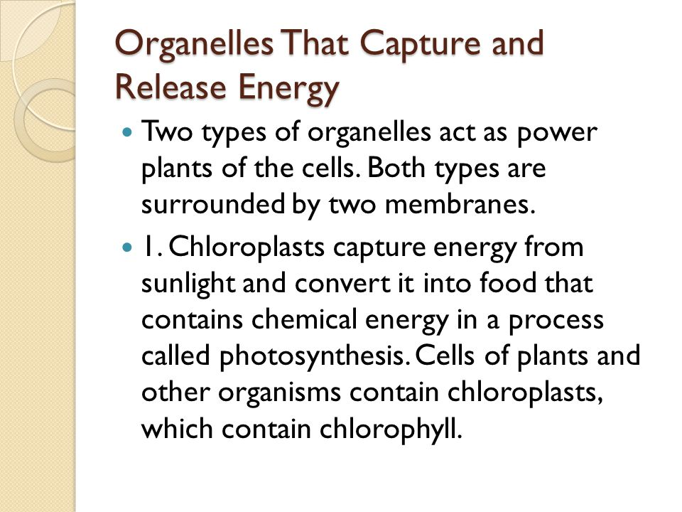 organelle release oxygen Tldr (too long didn't read) cellular respiration is a chemical reaction plants need to get energy from glucose respiration uses glucose and oxygen to produce carbon dioxide and water and release energy.