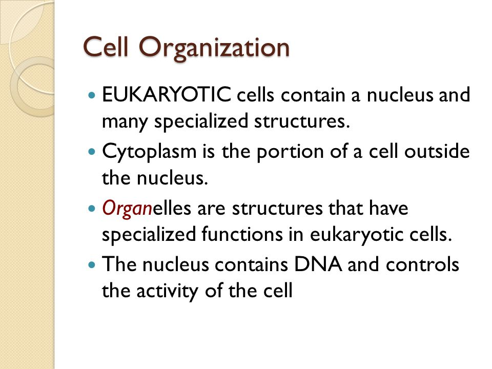 Cell Organization EUKARYOTIC cells contain a nucleus and many specialized structures. Cytoplasm is the portion of a cell outside the nucleus.