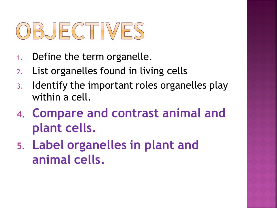Objectives Compare and contrast animal and plant cells.