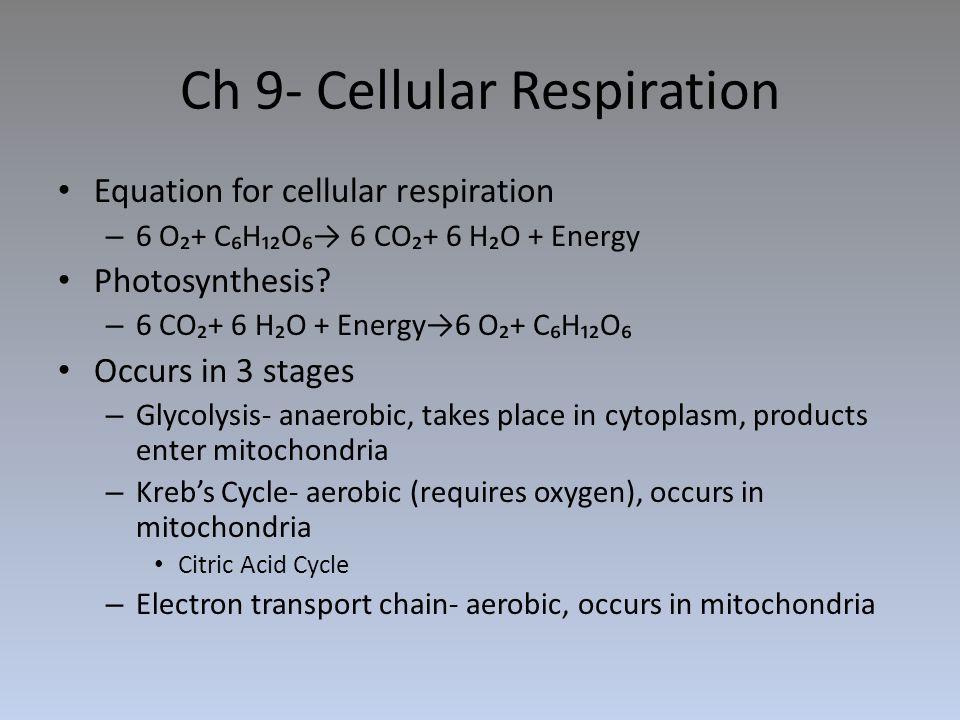Ch 9- Cellular Respiration