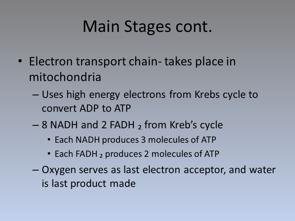 Main Stages cont. Electron transport chain- takes place in mitochondria. Uses high energy electrons from Krebs cycle to convert ADP to ATP.