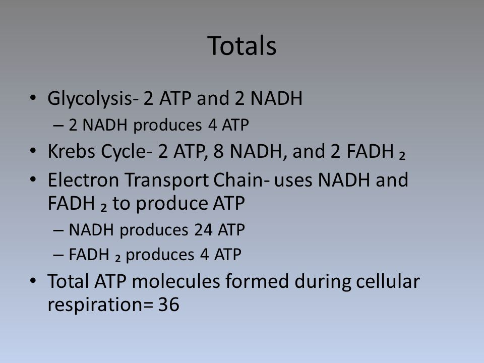 Totals Glycolysis- 2 ATP and 2 NADH