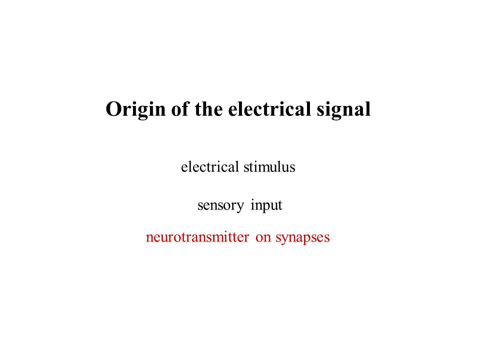 Origin of the electrical signal electrical stimulus sensory input neurotransmitter on synapses