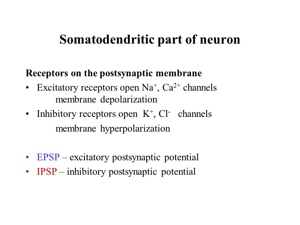 Somatodendritic part of neuron