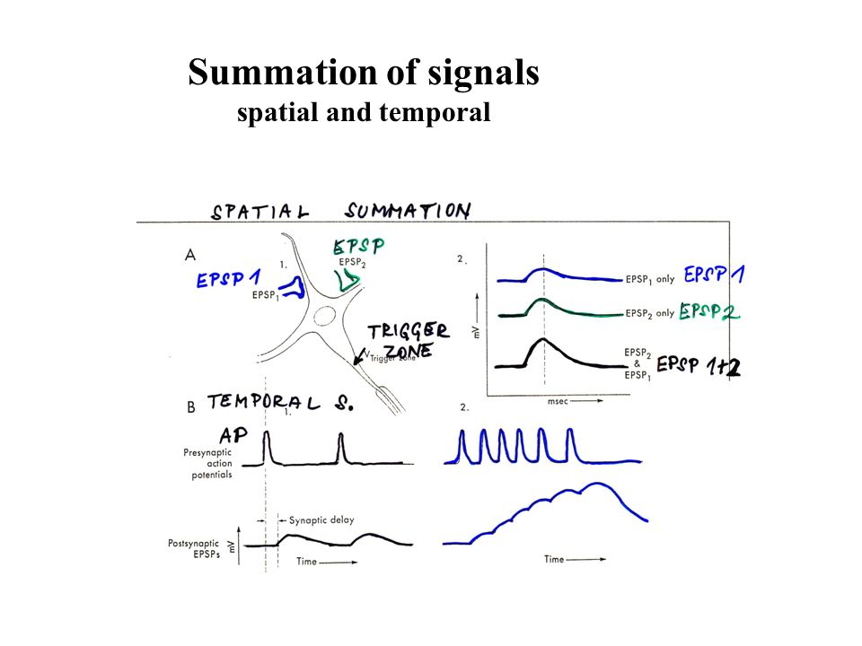 Summation of signals spatial and temporal