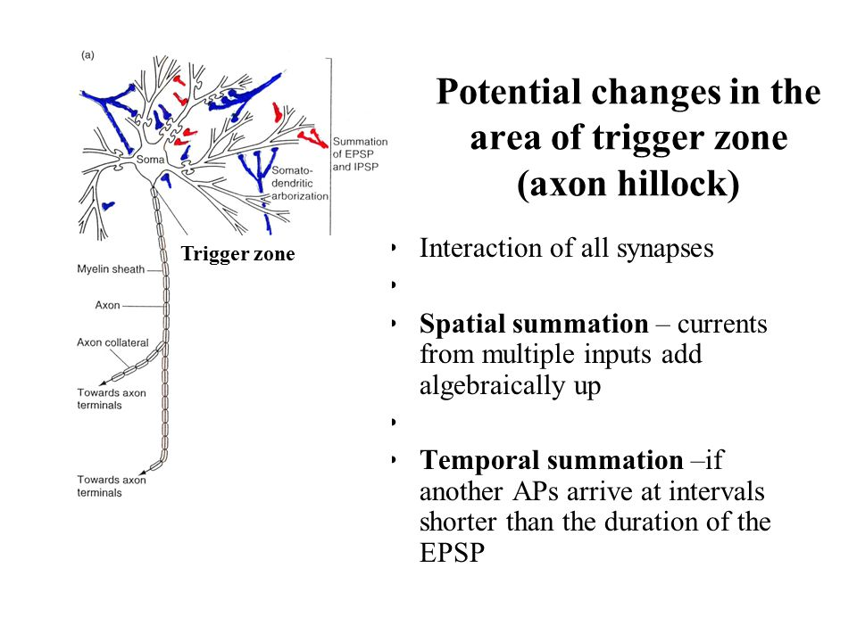 Potential changes in the area of trigger zone (axon hillock)