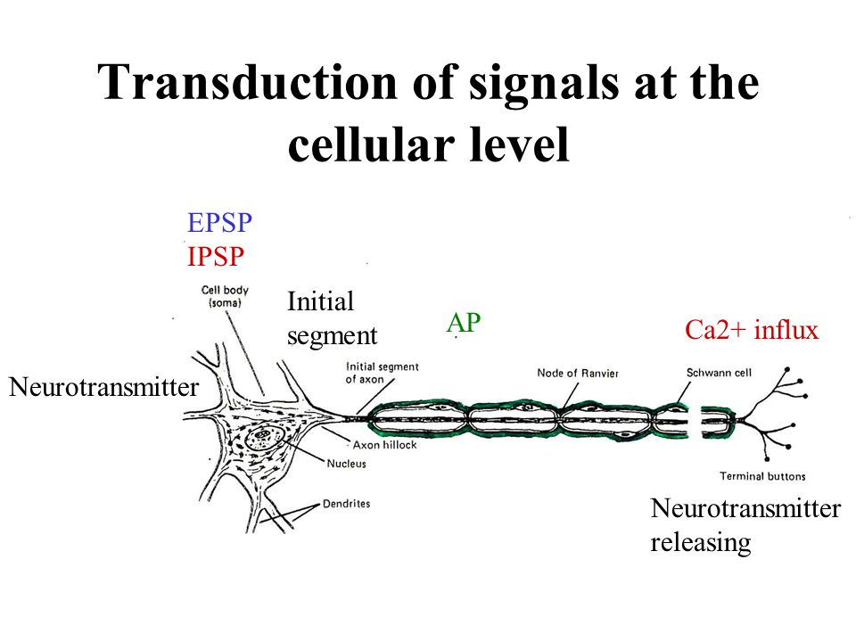 Transduction of signals at the cellular level