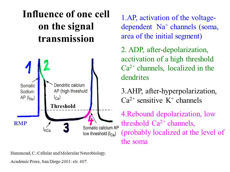 Influence of one cell on the signal transmission
