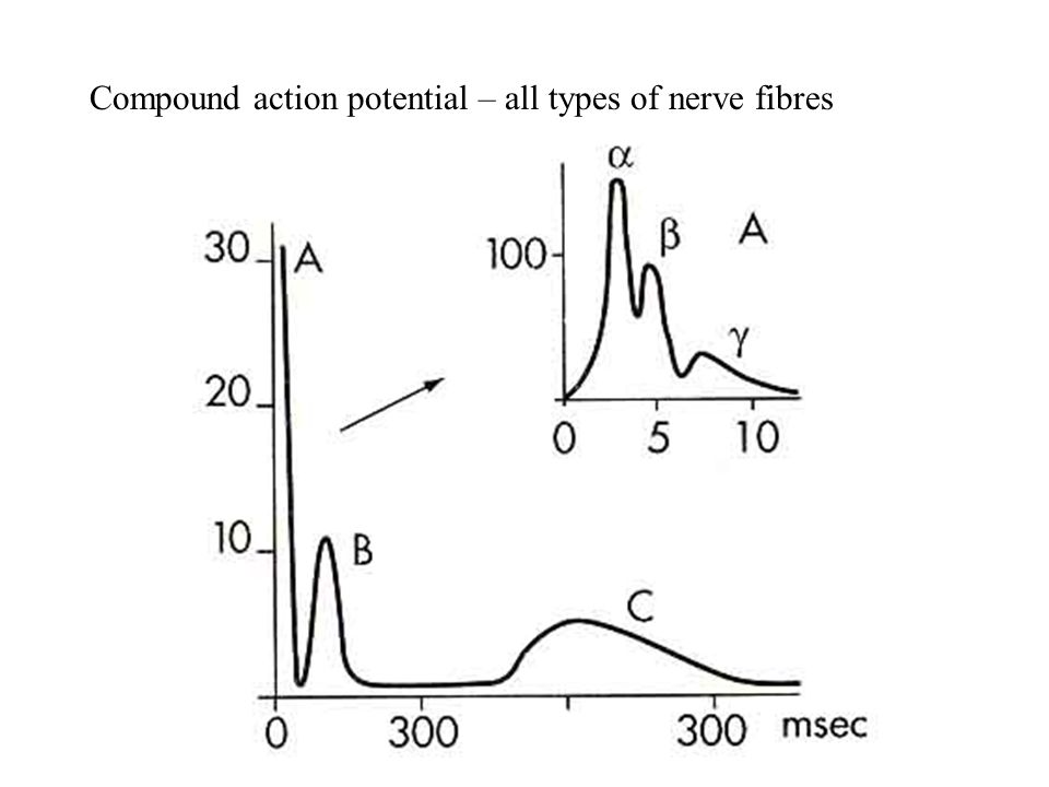 Compound action potential – all types of nerve fibres