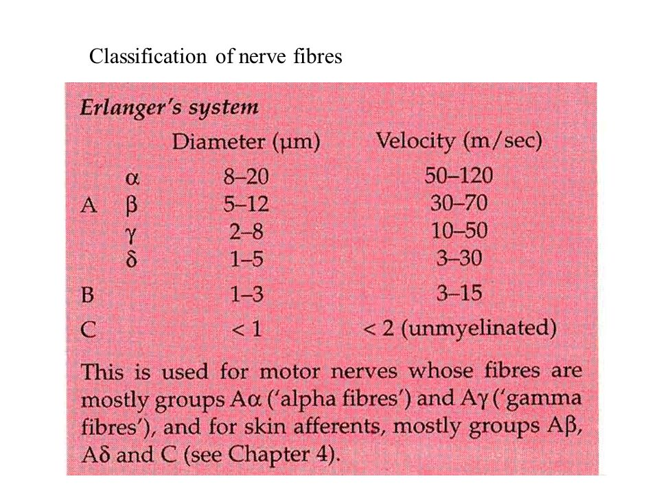 Classification of nerve fibres