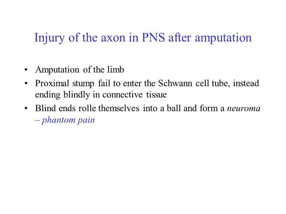 Injury of the axon in PNS after amputation