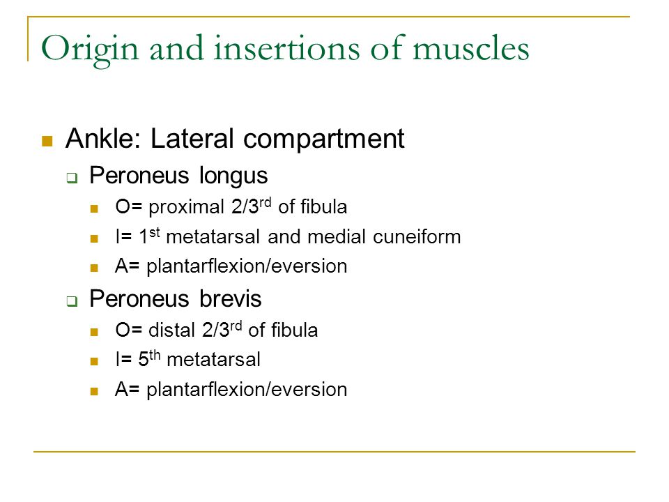 Origin and insertions of muscles