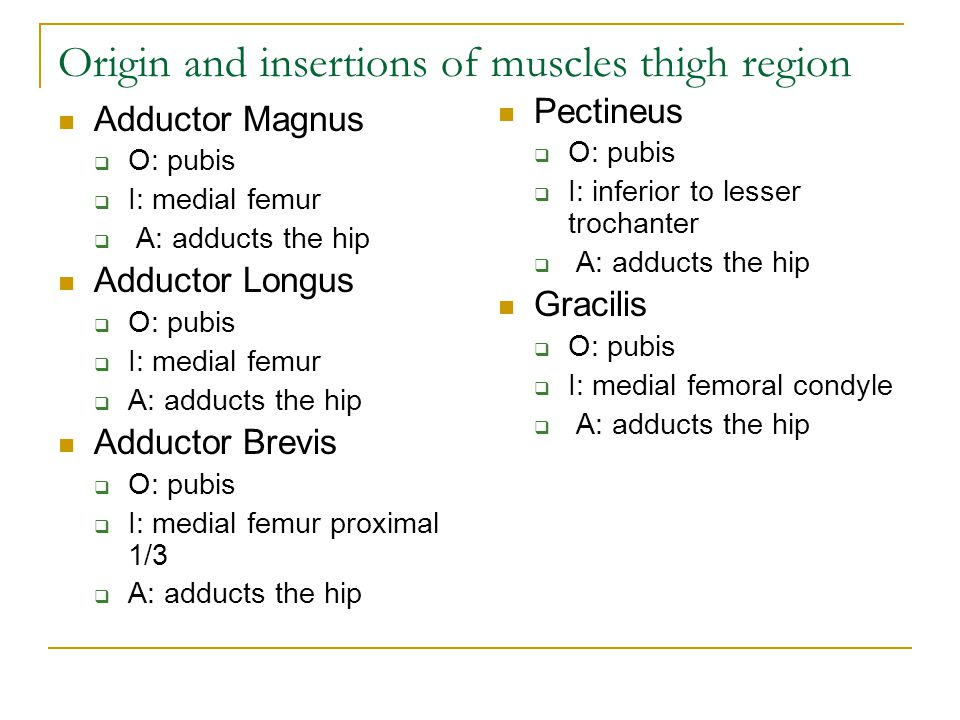 Origin and insertions of muscles thigh region