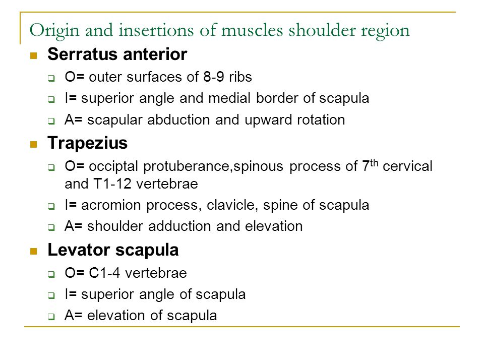 Origin and insertions of muscles shoulder region