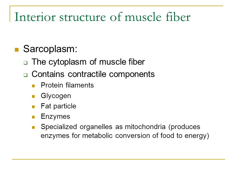 Interior structure of muscle fiber