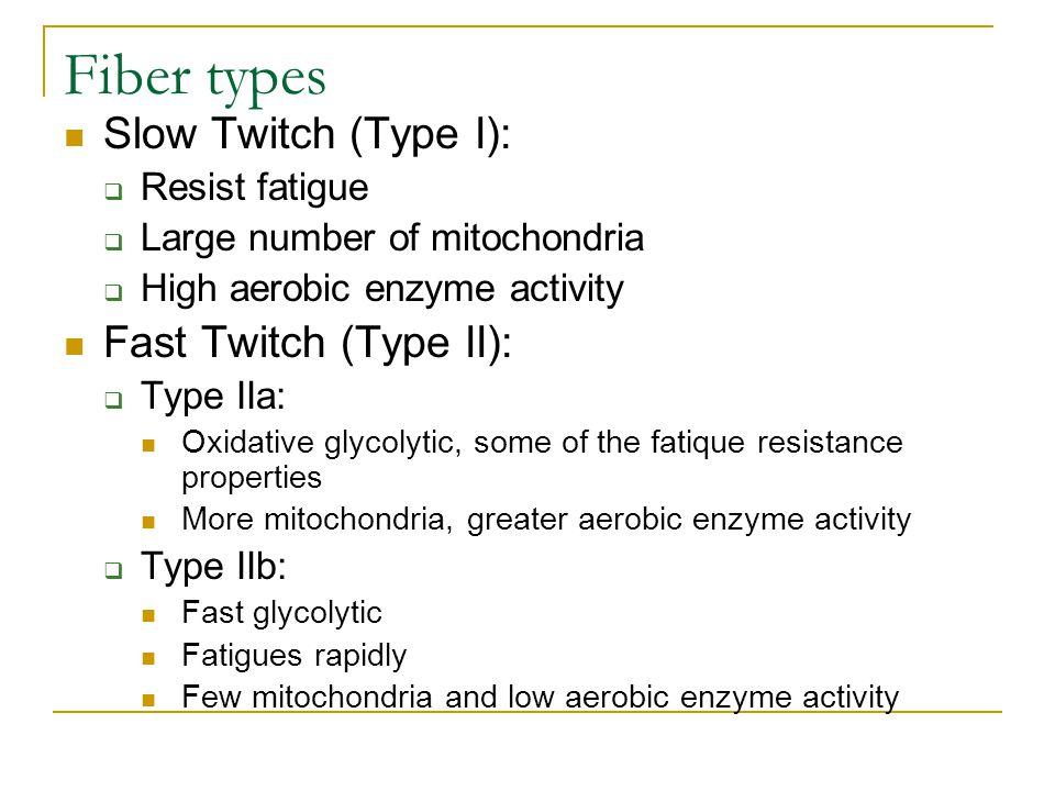 Fiber types Slow Twitch (Type I): Fast Twitch (Type II):