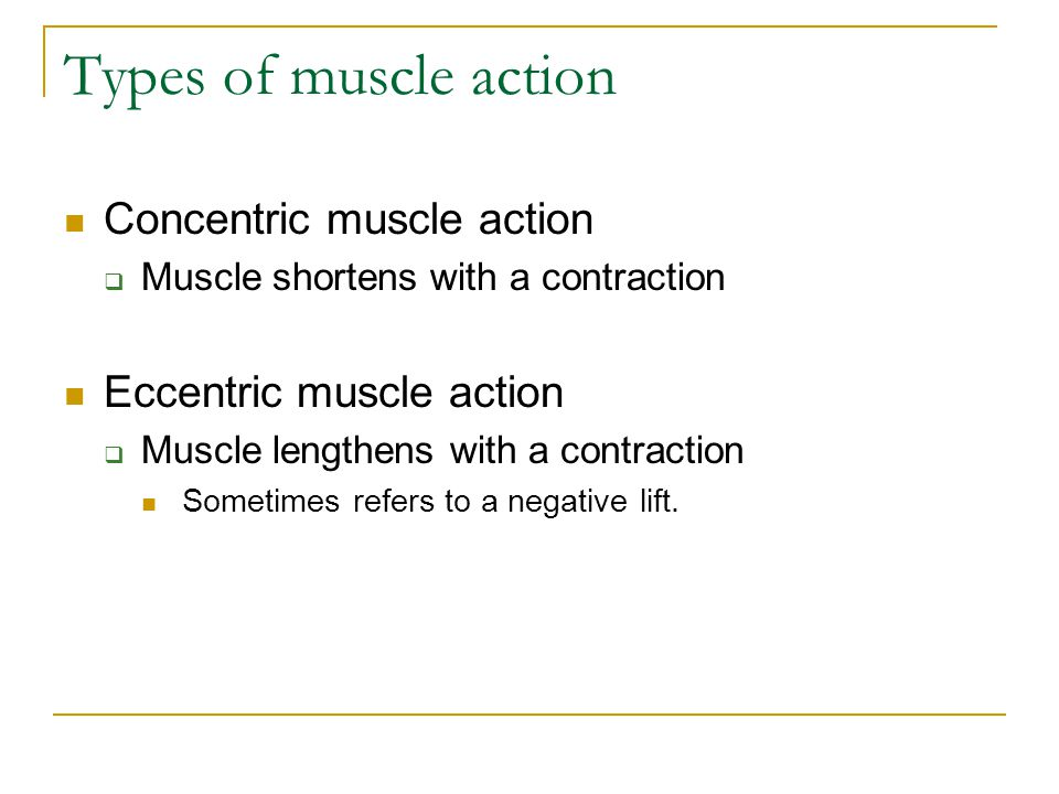 Types of muscle action Concentric muscle action
