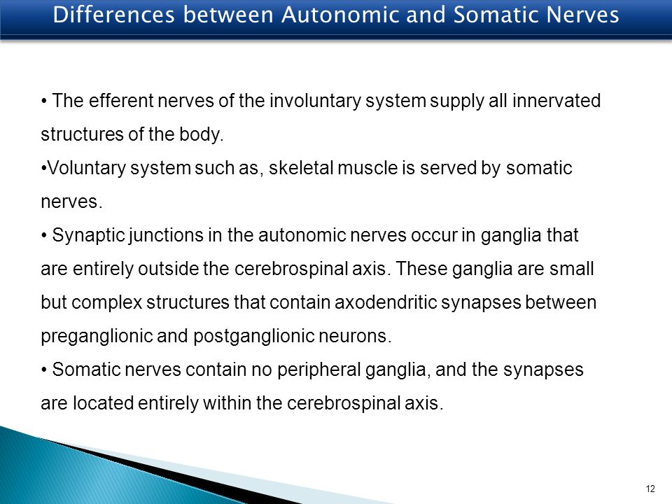 Differences between Autonomic and Somatic Nerves