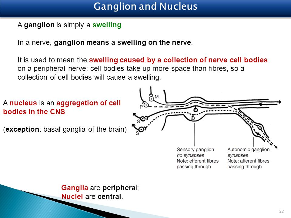 Ganglion and Nucleus A ganglion is simply a swelling.