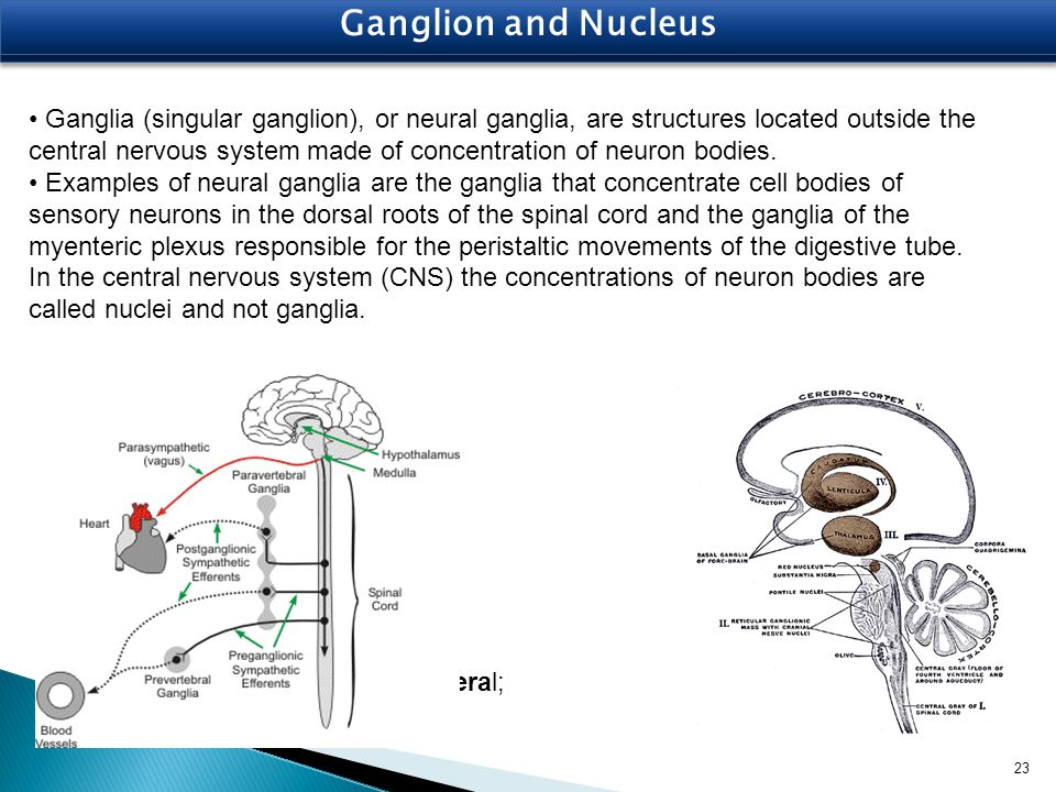 Ganglion and Nucleus