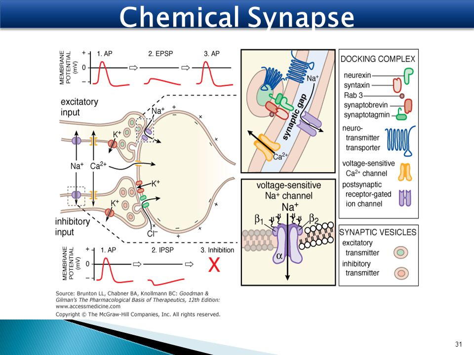 Chemical Synapse 31