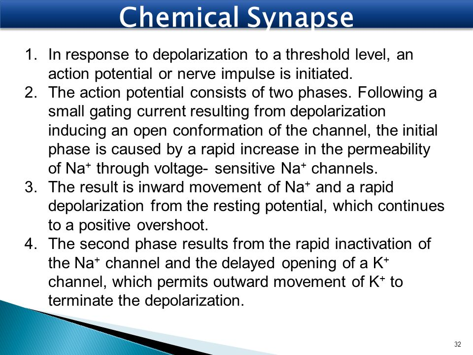 Chemical Synapse In response to depolarization to a threshold level, an action potential or nerve impulse is initiated.