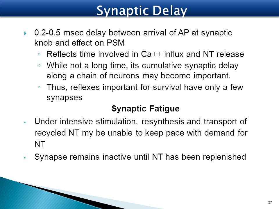 Synaptic Delay 0.2-0.5 msec delay between arrival of AP at synaptic knob and effect on PSM. Reflects time involved in Ca++ influx and NT release.