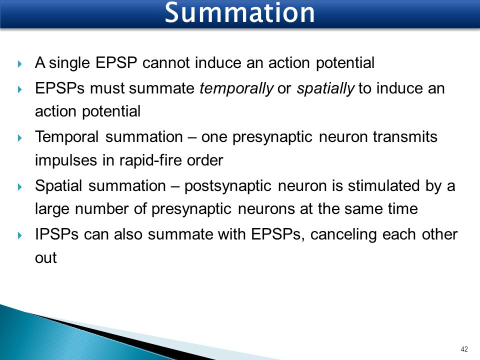 Summation A single EPSP cannot induce an action potential