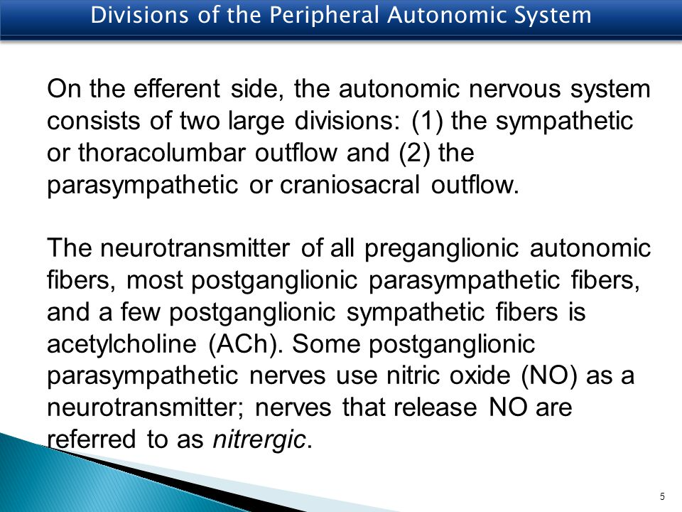 Divisions of the Peripheral Autonomic System
