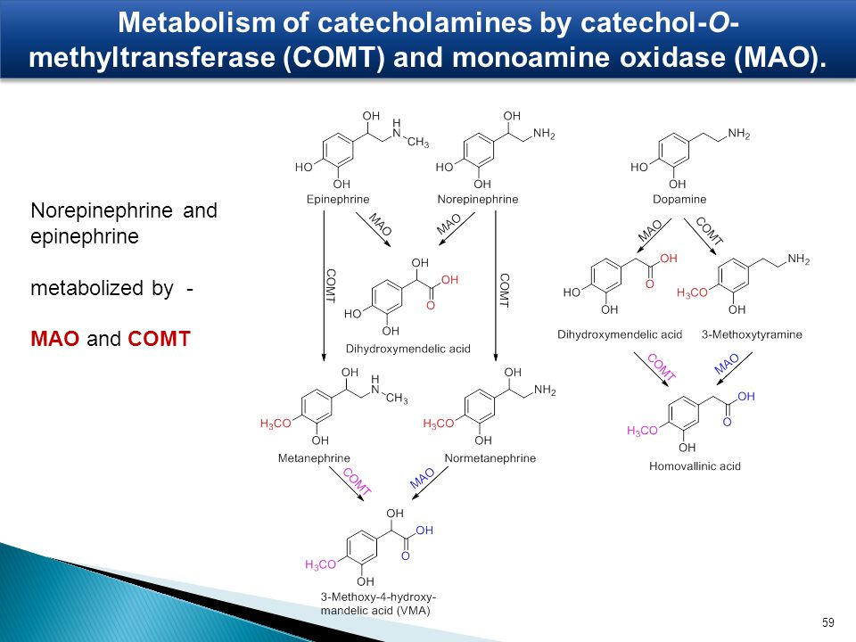 Metabolism of catecholamines by catechol-O-methyltransferase (COMT) and monoamine oxidase (MAO).