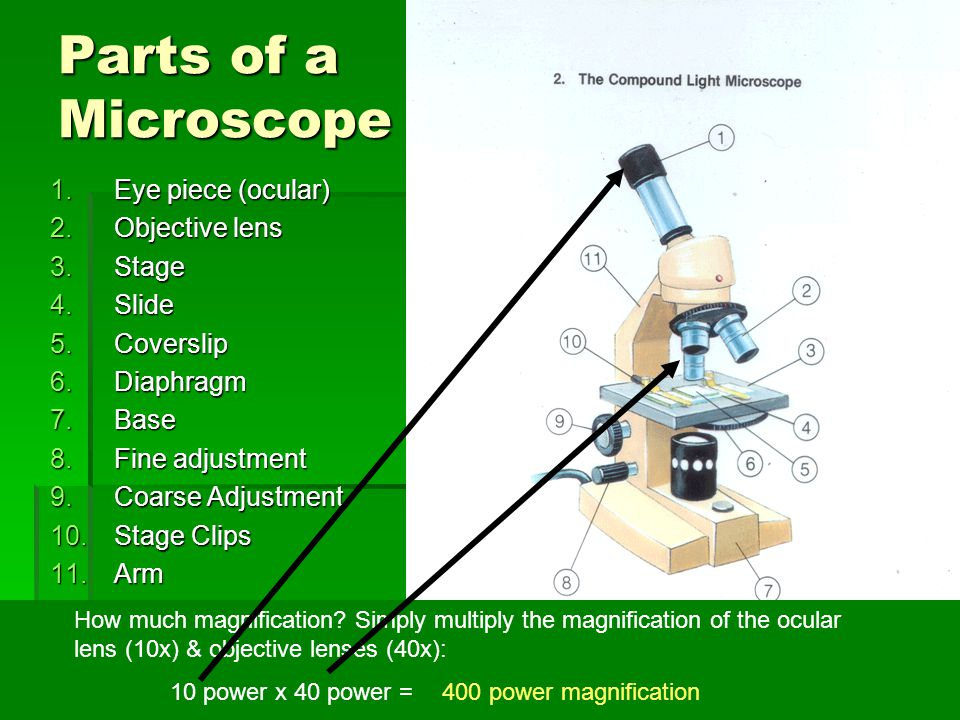 Parts of a Microscope Eye piece (ocular) Objective lens Stage Slide