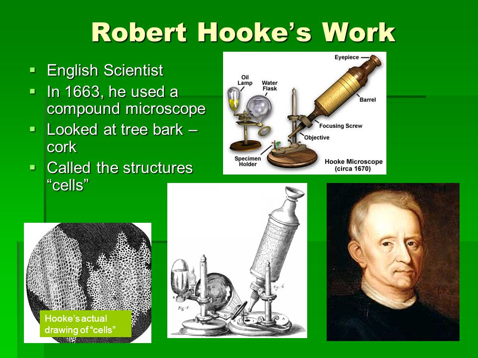 Robert Hooke's Work English Scientist