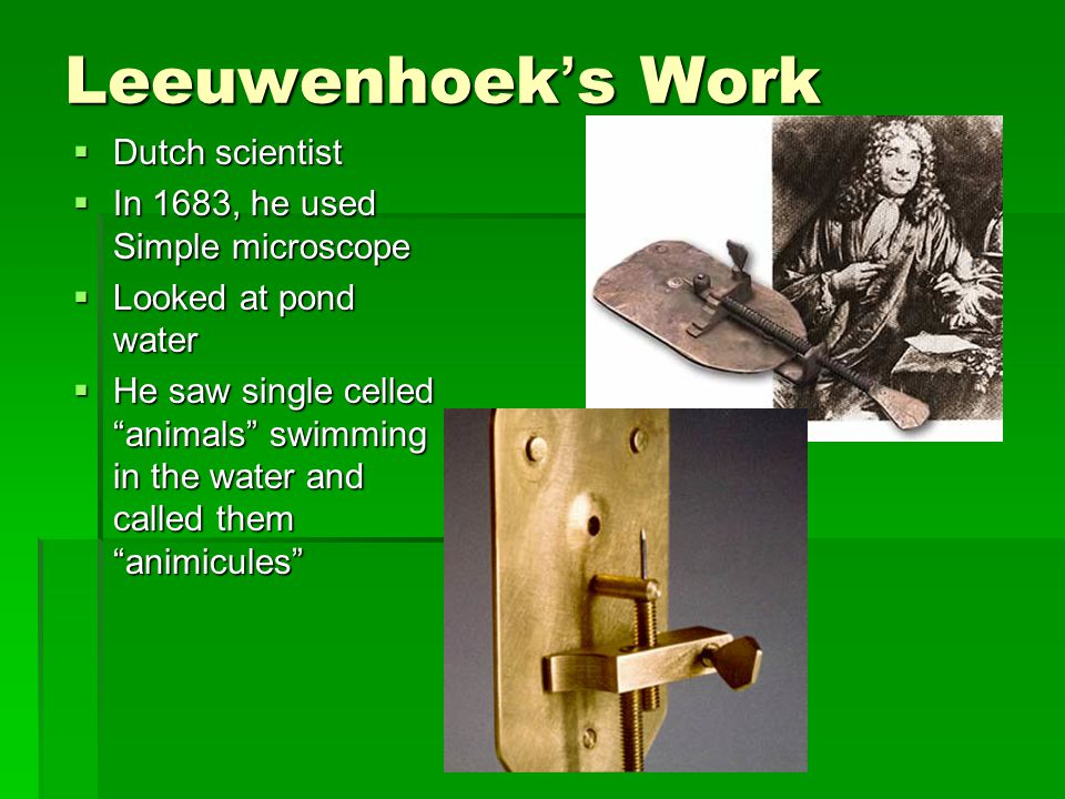 Leeuwenhoek's Work Dutch scientist In 1683, he used Simple microscope
