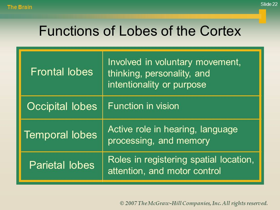 Functions of Lobes of the Cortex