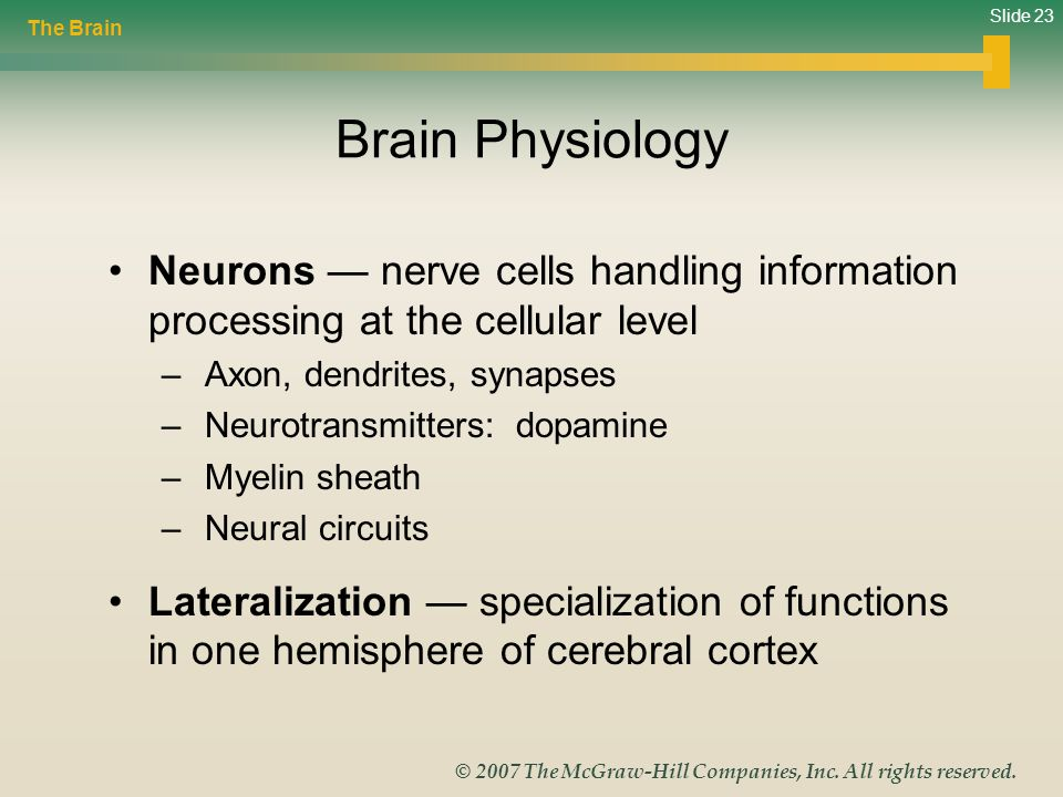 The Brain Brain Physiology. Neurons — nerve cells handling information processing at the cellular level.