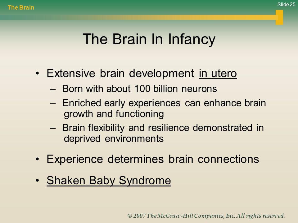 The Brain In Infancy Extensive brain development in utero