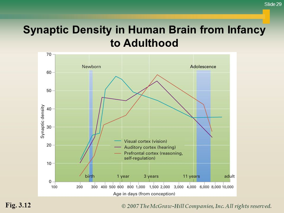 Synaptic Density in Human Brain from Infancy to Adulthood