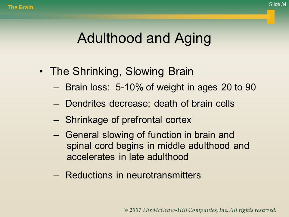 Adulthood and Aging The Shrinking, Slowing Brain