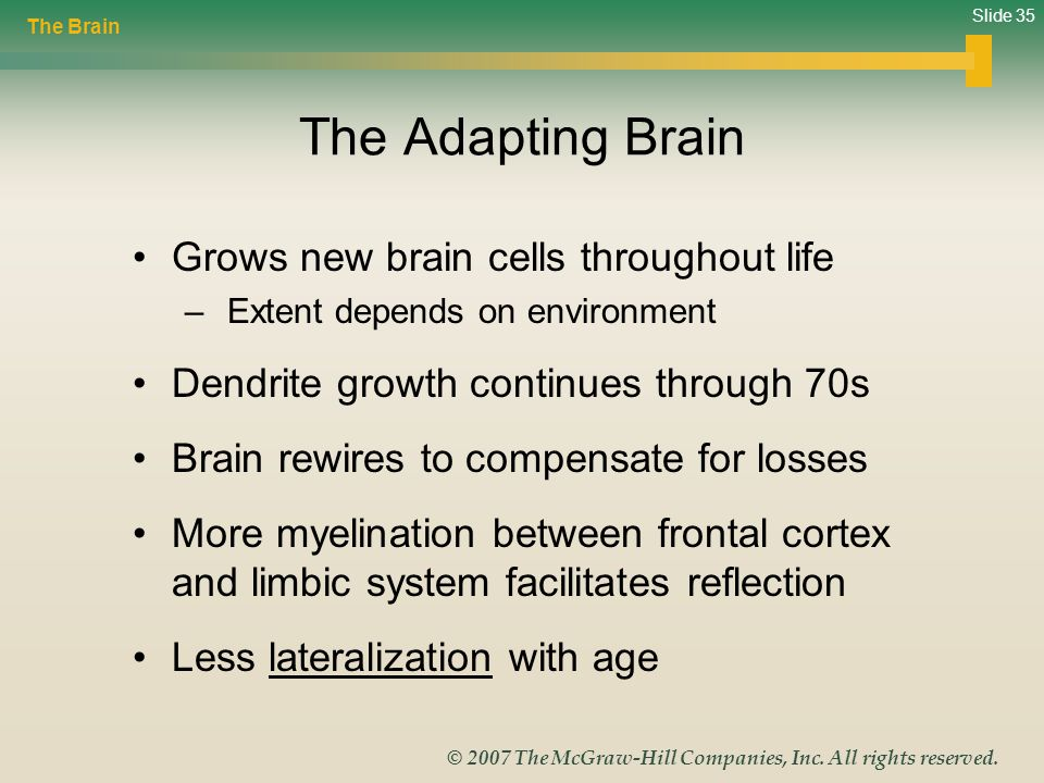 The Adapting Brain Grows new brain cells throughout life