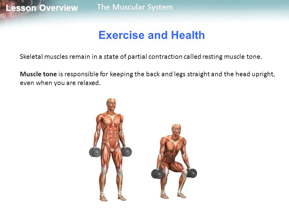 Exercise and Health Skeletal muscles remain in a state of partial contraction called resting muscle tone.