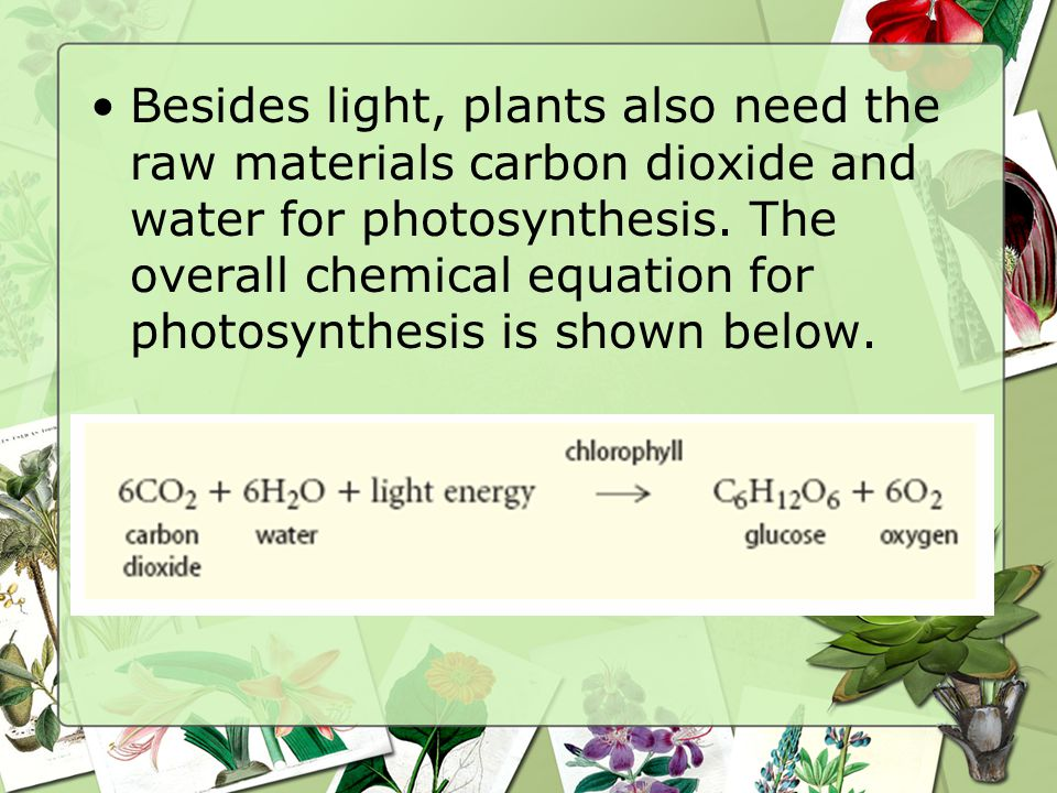 Besides light, plants also need the raw materials carbon dioxide and water for photosynthesis.
