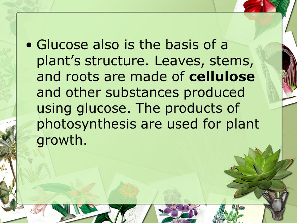 Glucose also is the basis of a plant's structure