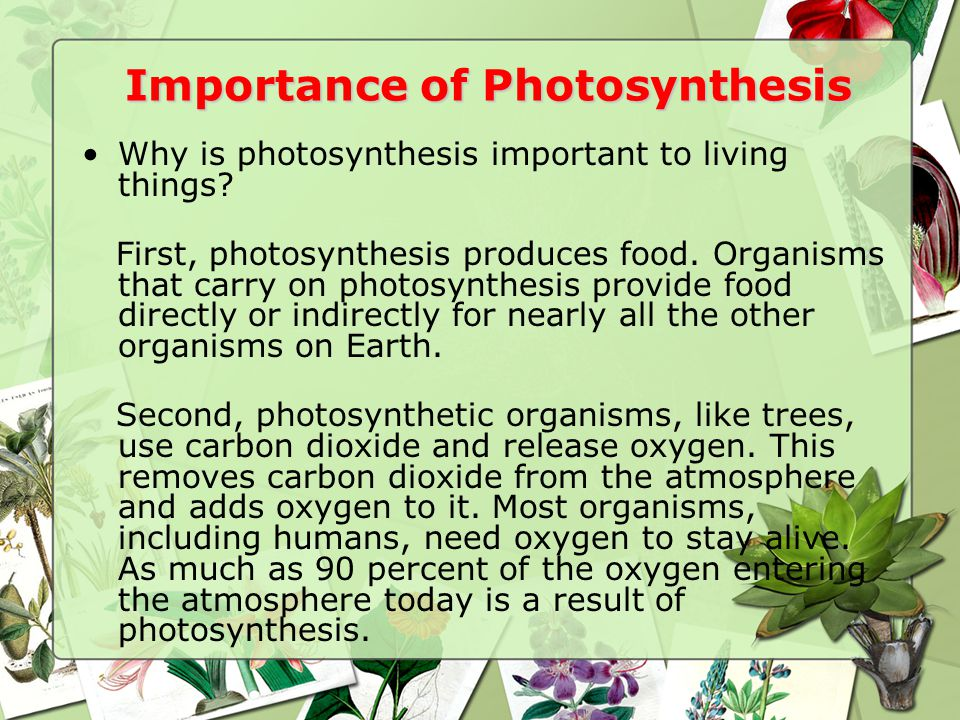 Importance of Photosynthesis
