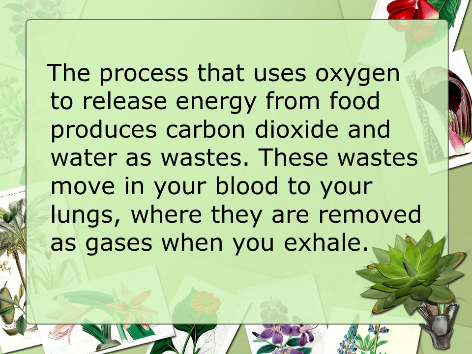 The process that uses oxygen to release energy from food produces carbon dioxide and water as wastes.