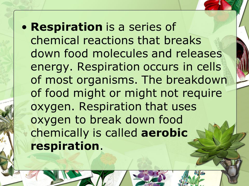 Respiration is a series of chemical reactions that breaks down food molecules and releases energy.