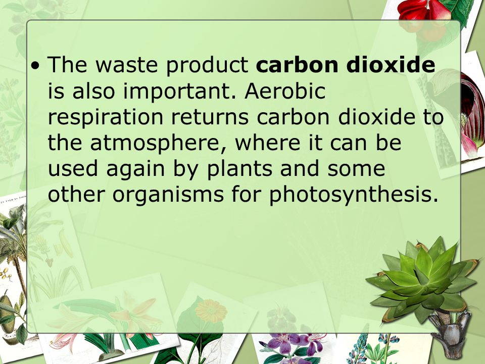 The waste product carbon dioxide is also important