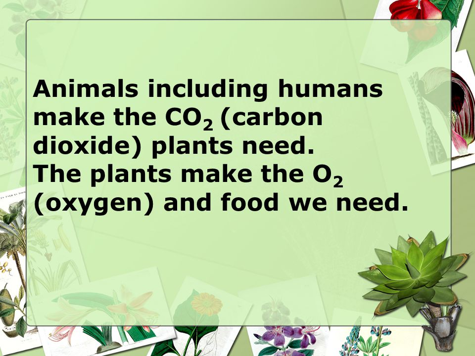 Animals including humans make the CO2 (carbon dioxide) plants need